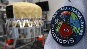 Frisches Gemüse für Astronauten?: Fliegendes Gewächshaus kreist um die Erde