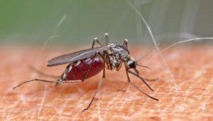 Kriebelmücken beißen wieder: Symptome und Tipps zur Bekämpfung