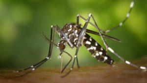 Kriebelmücken beißen wieder: Symptome & Tipps zur Bekämpfung