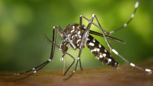 Wann muss ich bei einem Mückenstich zum Arzt?